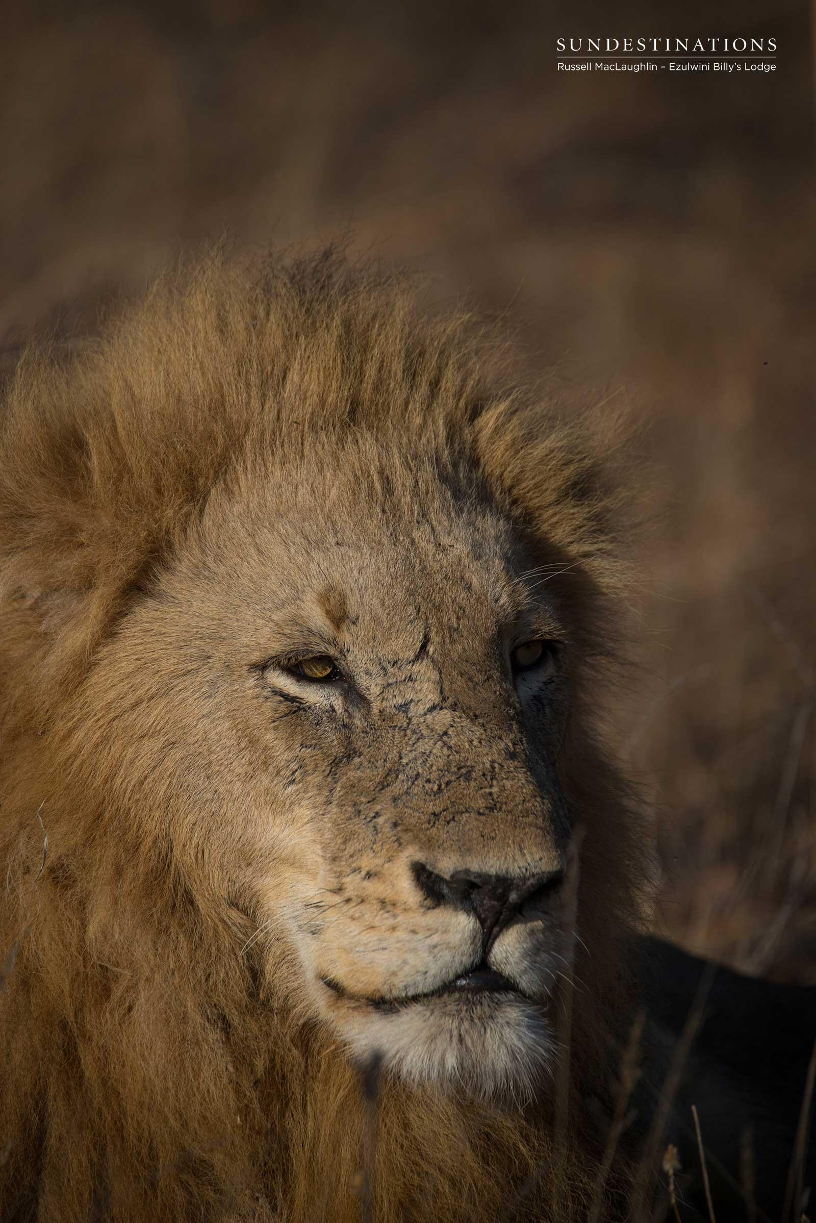 Ezulwini Male Lions
