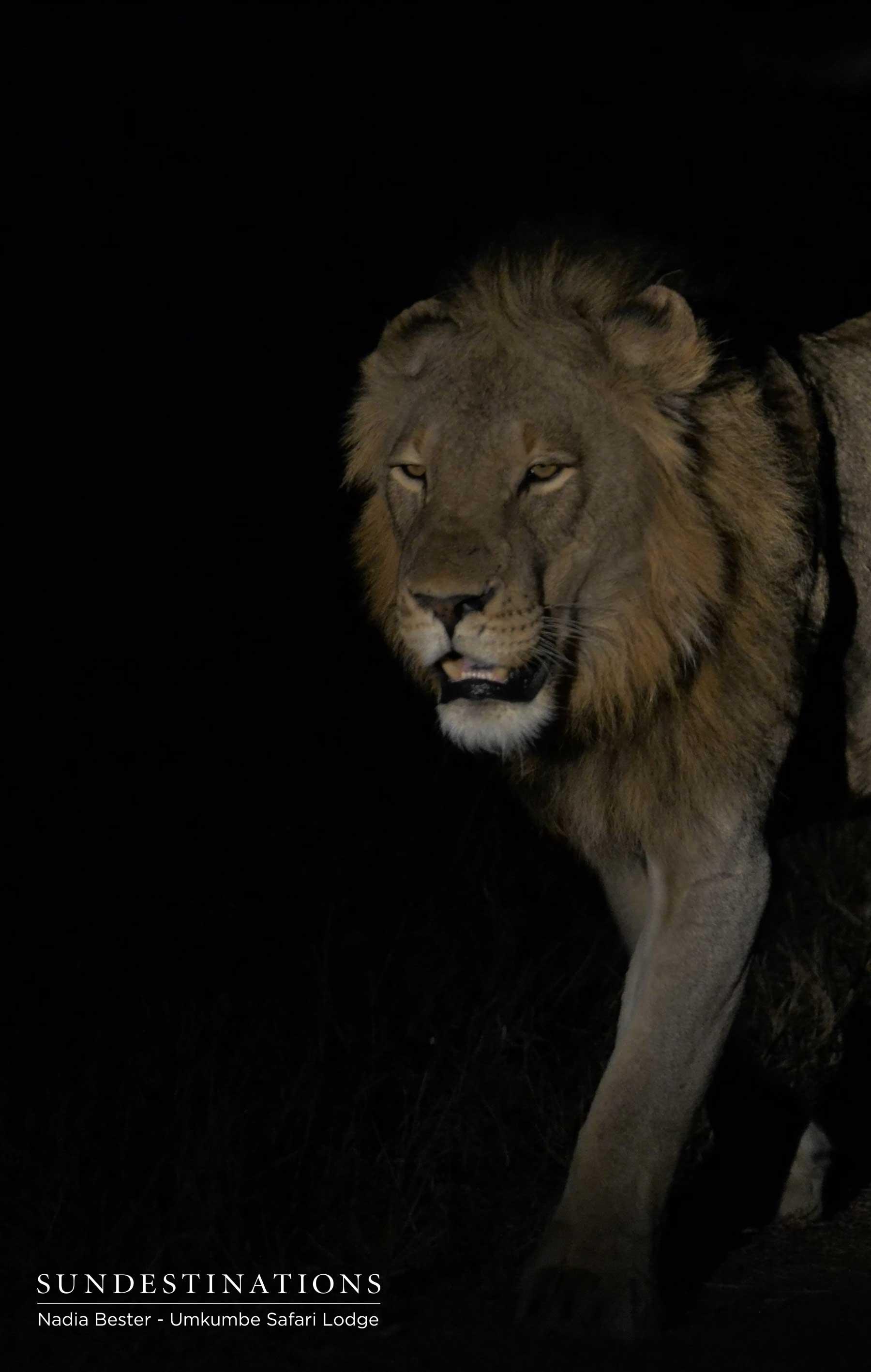 Tsalala Lions Umkumbe