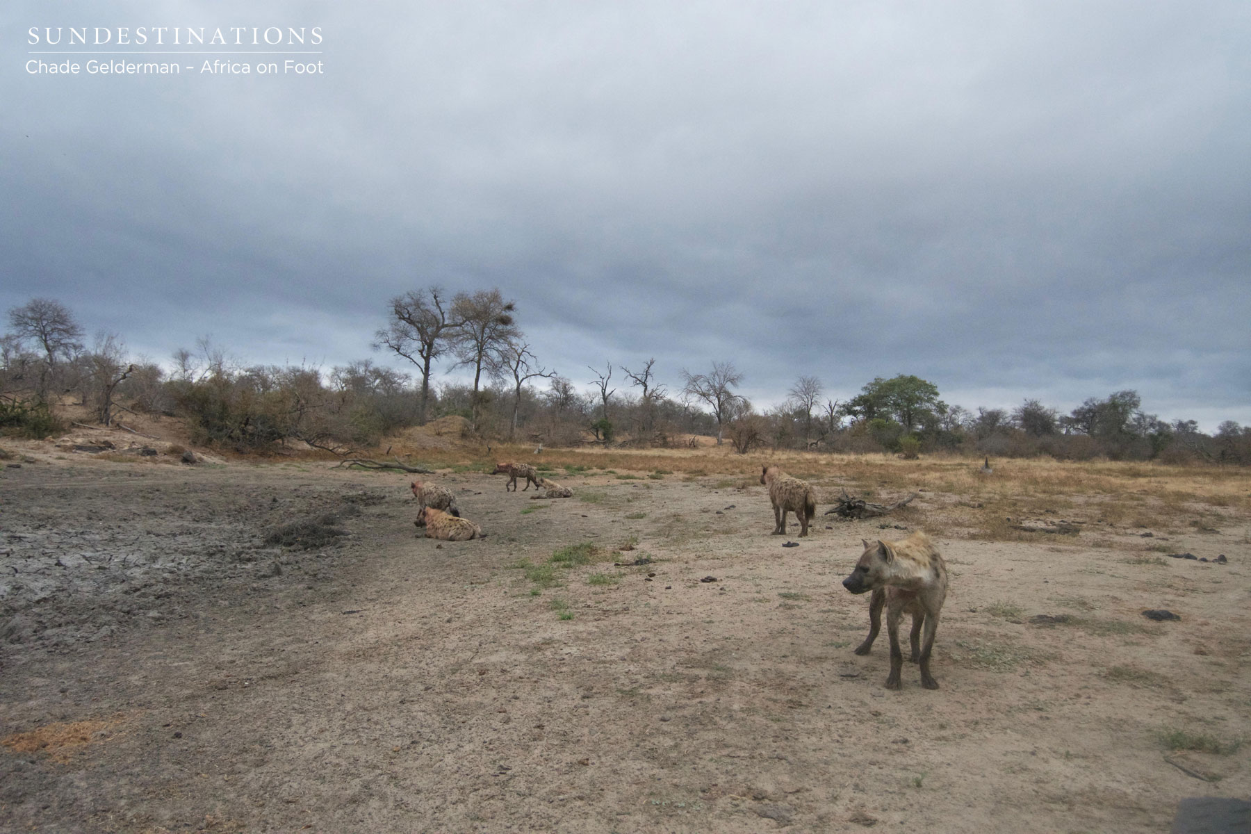 Clans of Hyena