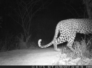 """Christian and the team at Ezulwini Game Lodges strategically placed camera traps in high """"wildlife"""" traffic areas close to the lodge. The results are always astounding, if not amusing. Over the past few months we've revealed a few stills from the camera traps, with astounding footage emerging from a bustling waterhole on our traverse. We […]"""