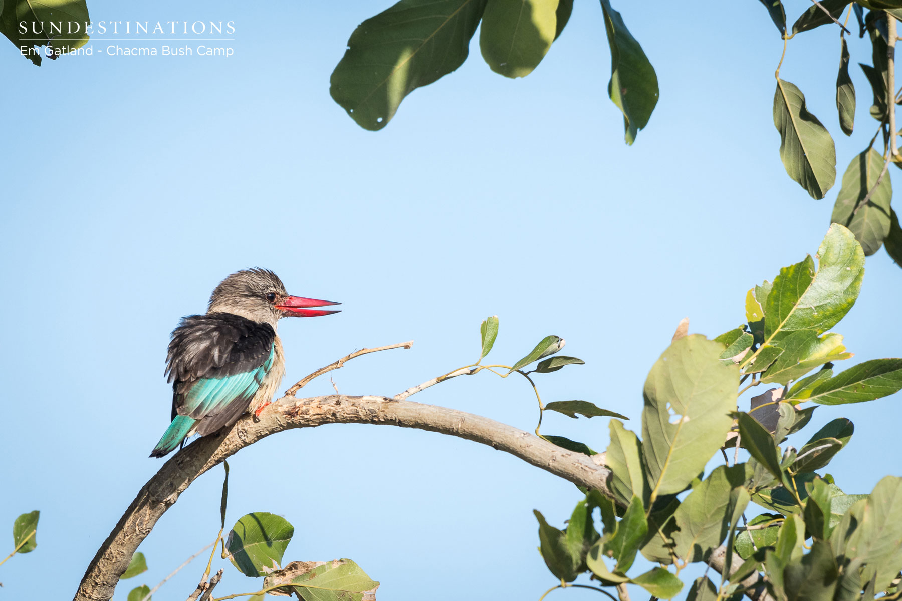 Photographs of Birds Spotted at Chacma Bush Camp