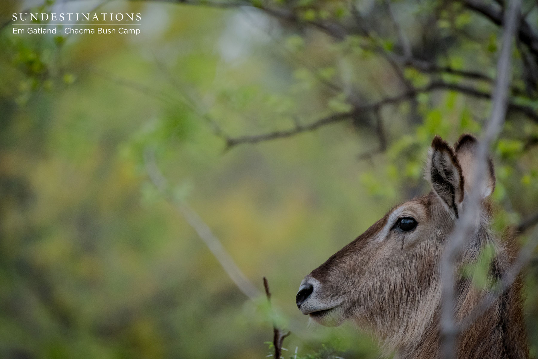 Week in Pics : The Spoils of the African Bushveld