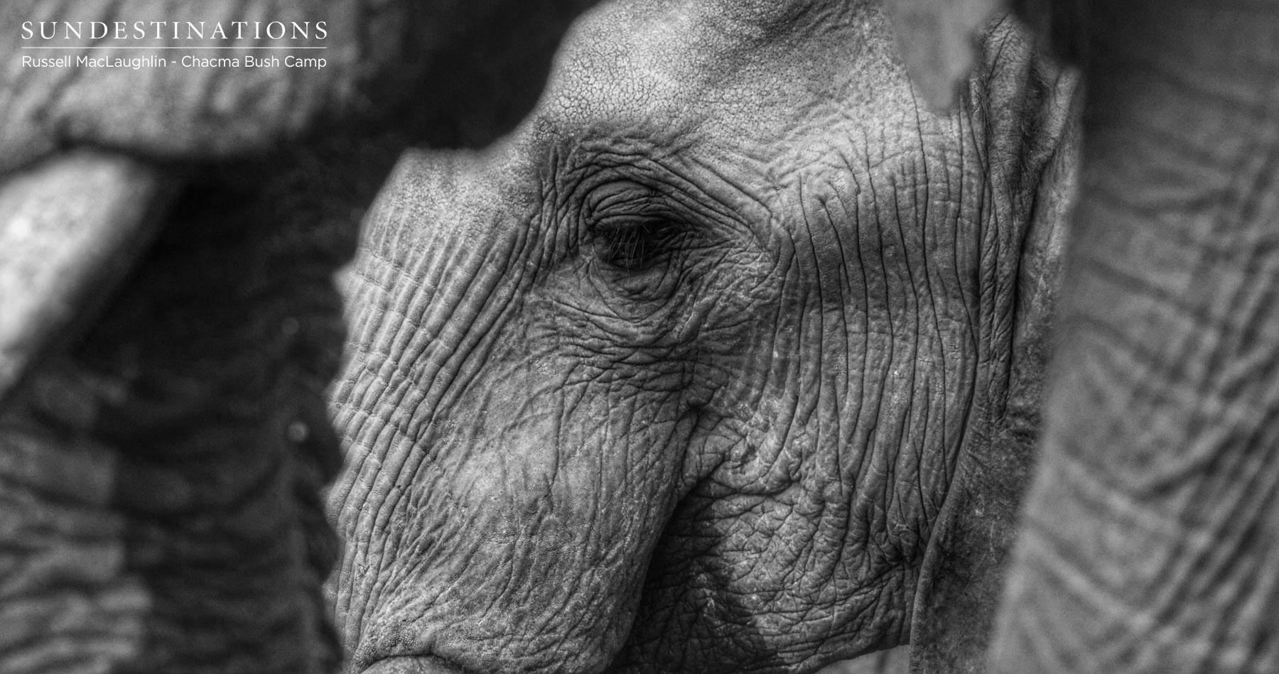 Elephant at Chacma Bush Camp