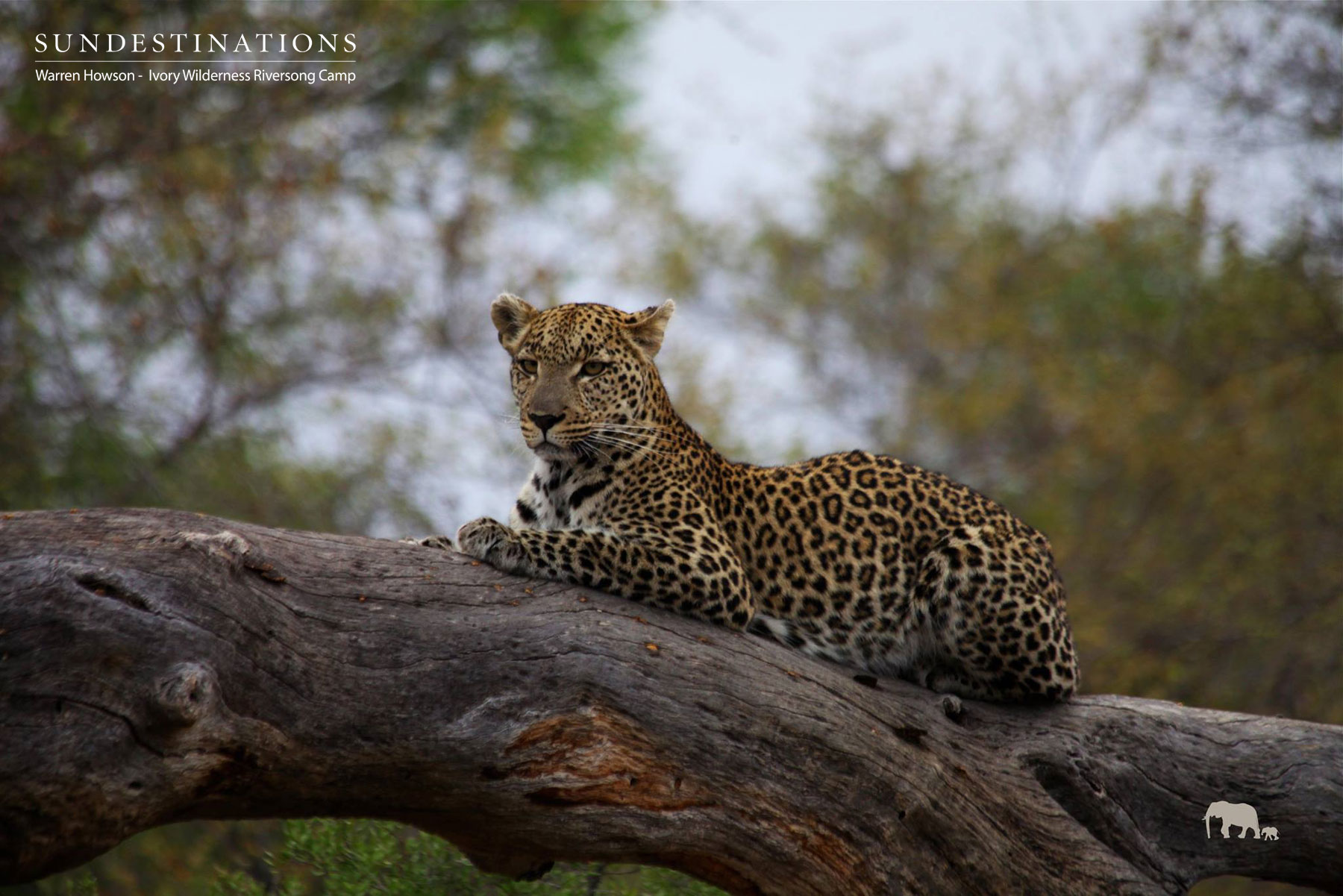Week in Pics : The Iconic Animals of the Safari World
