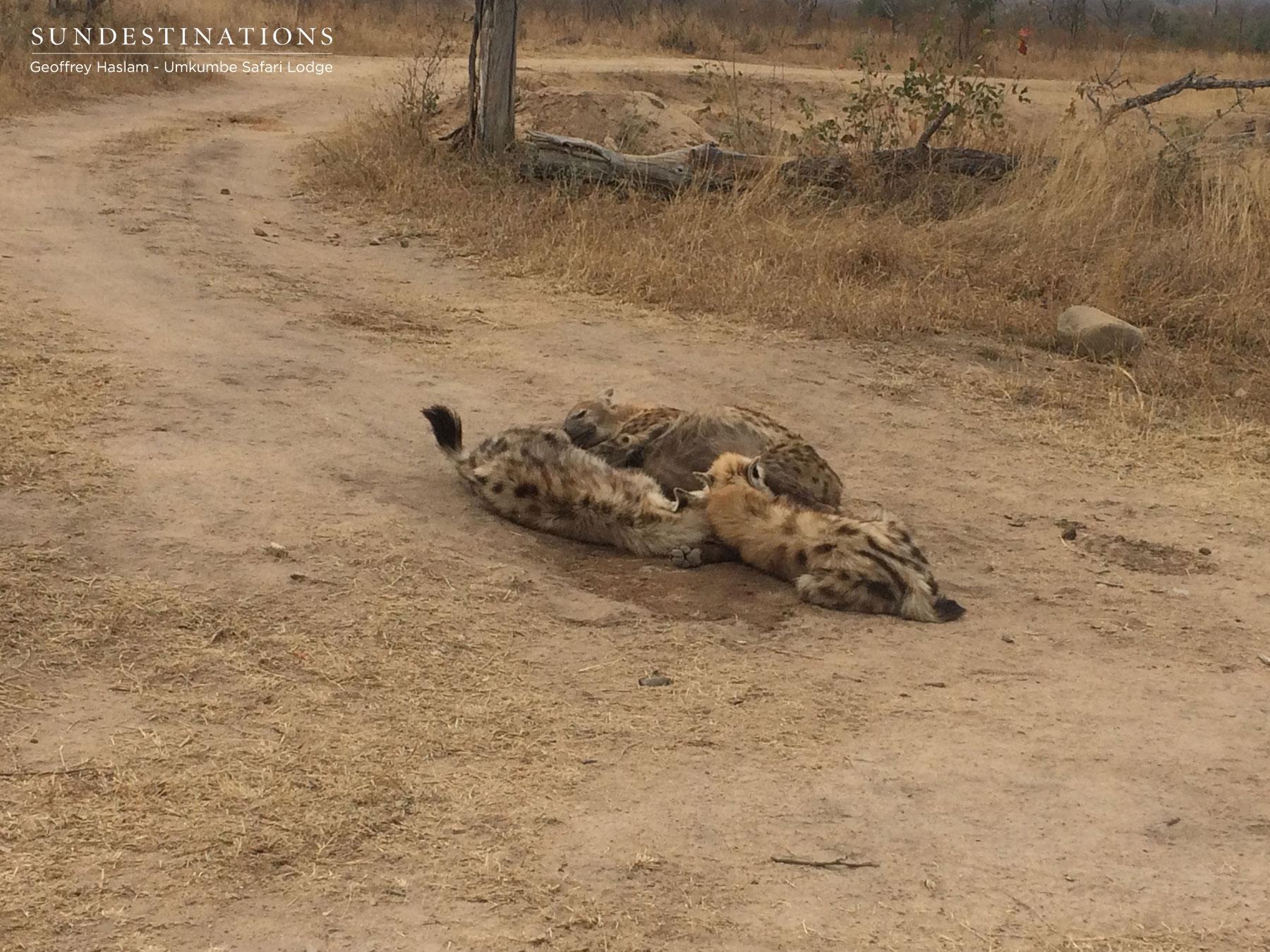 Hyena at Umkumbe