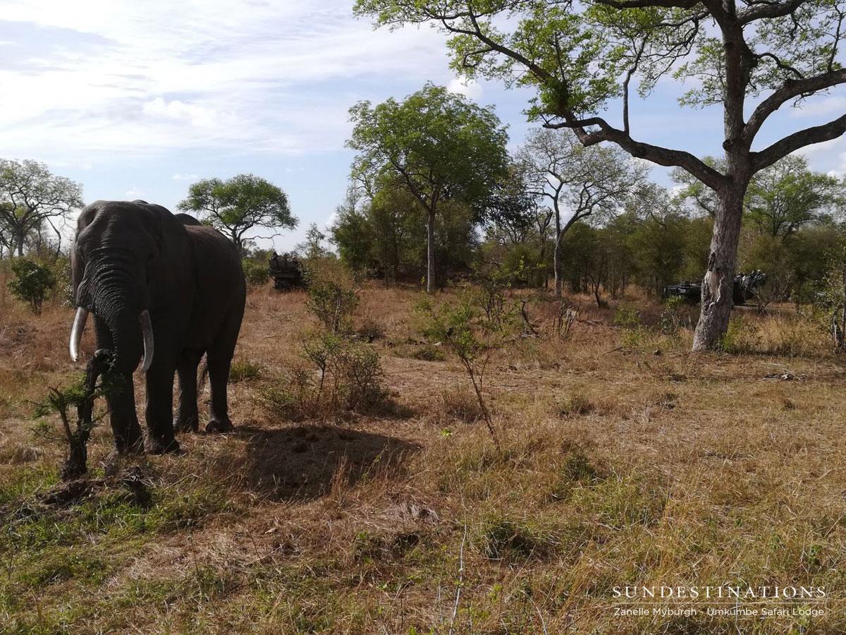 Leopard and Elephant at Umkumbe