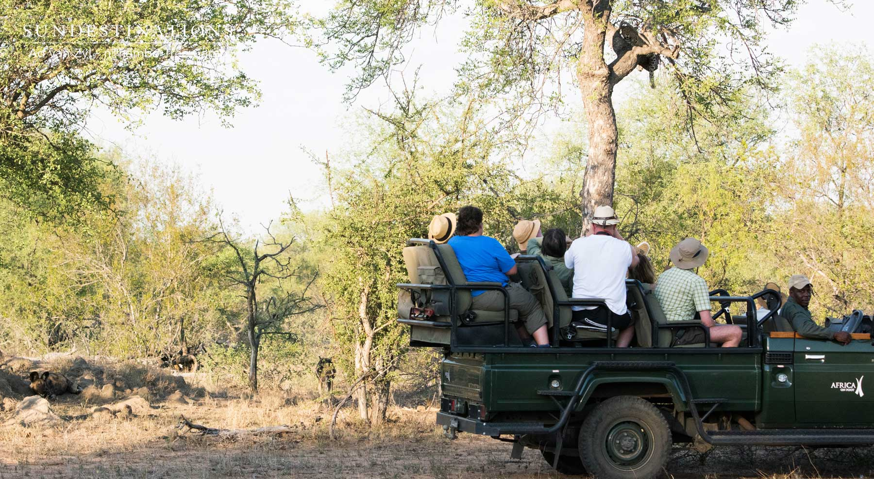 Wild Dogs and Leopard
