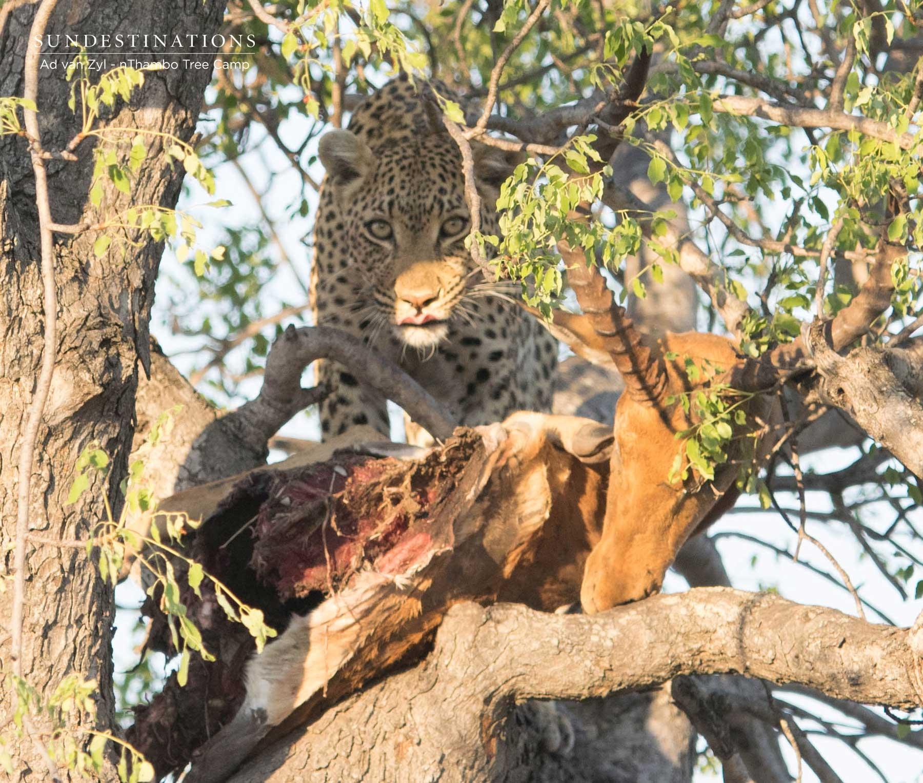 Leopard Wild Dog Tree