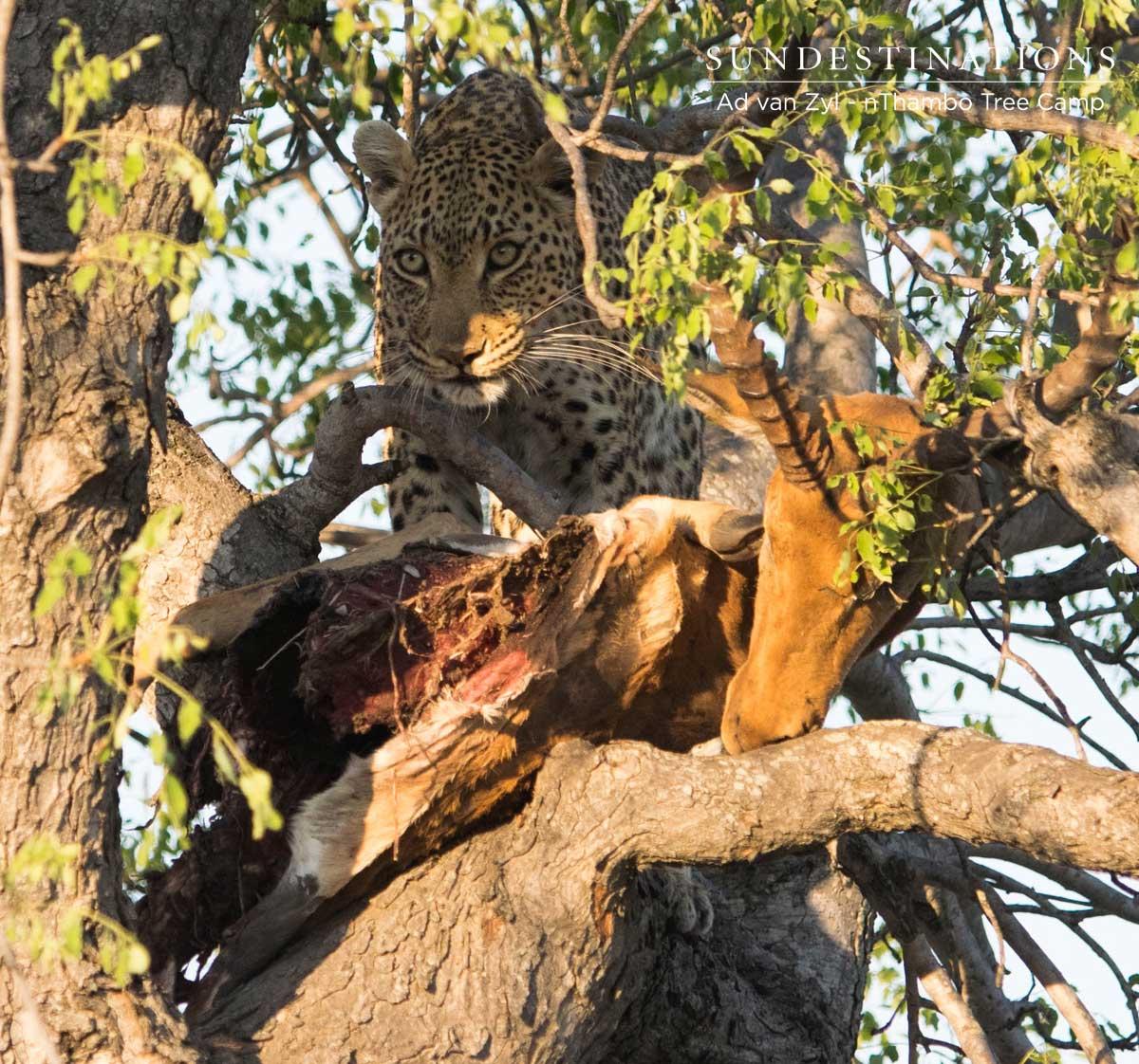 Leopard Wild Dog