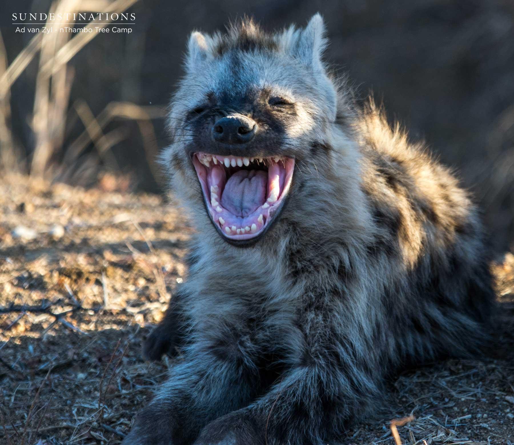 Fluffy Hyena Cub