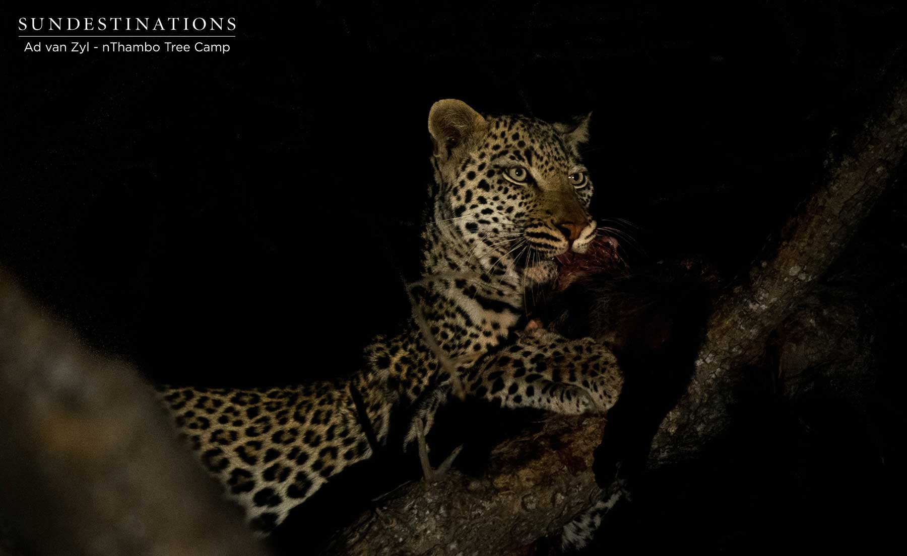 Week in Pics : Landscapes, Predators and Plains Game
