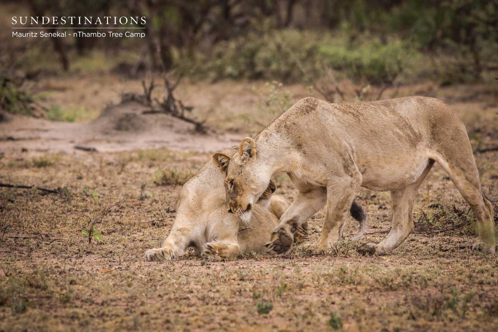 Ross Pride Breakaway Lionesses Greet