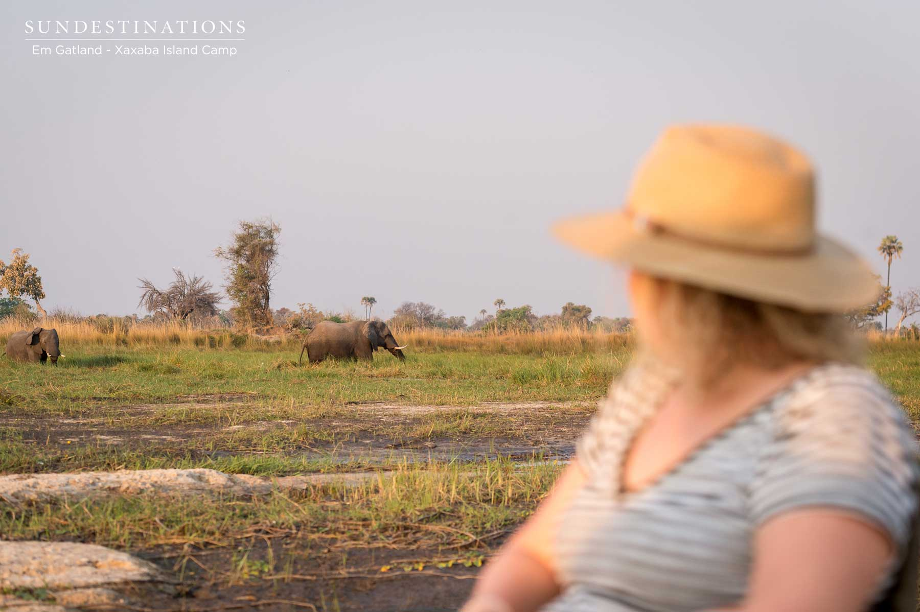 Why Choose the Okavango Delta as a Safari Destination?