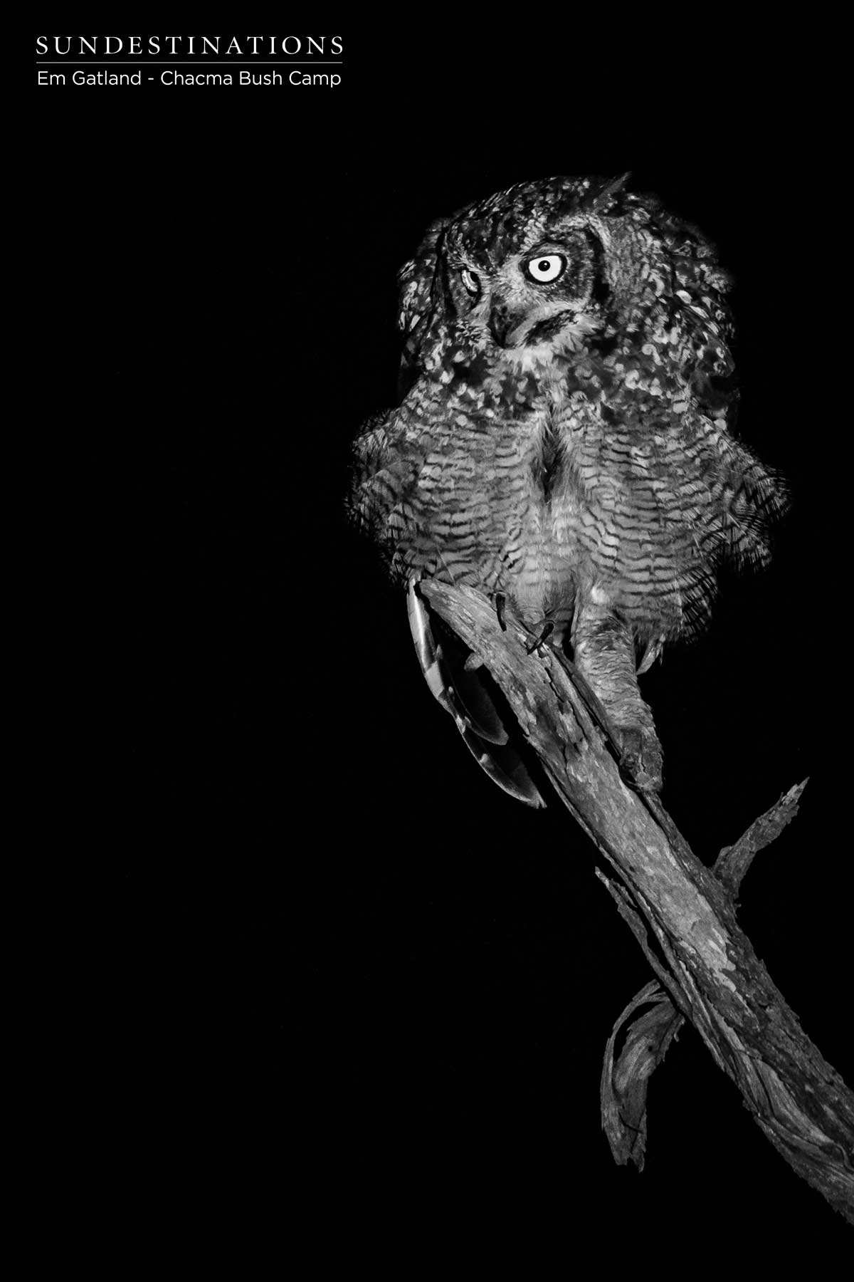 Owls at Chacma Bush Camp