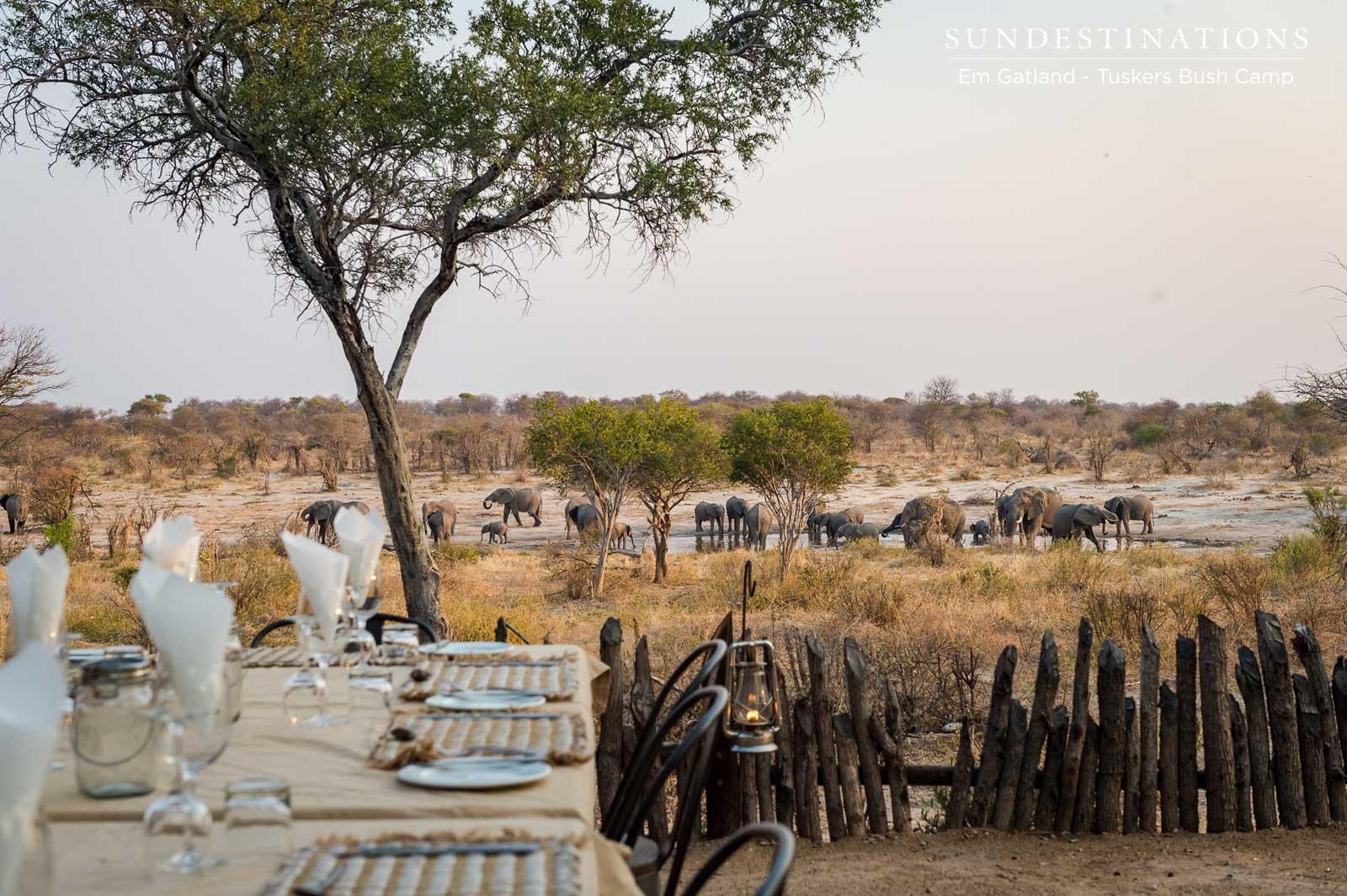 Elephants at Tuskers Bush Camp