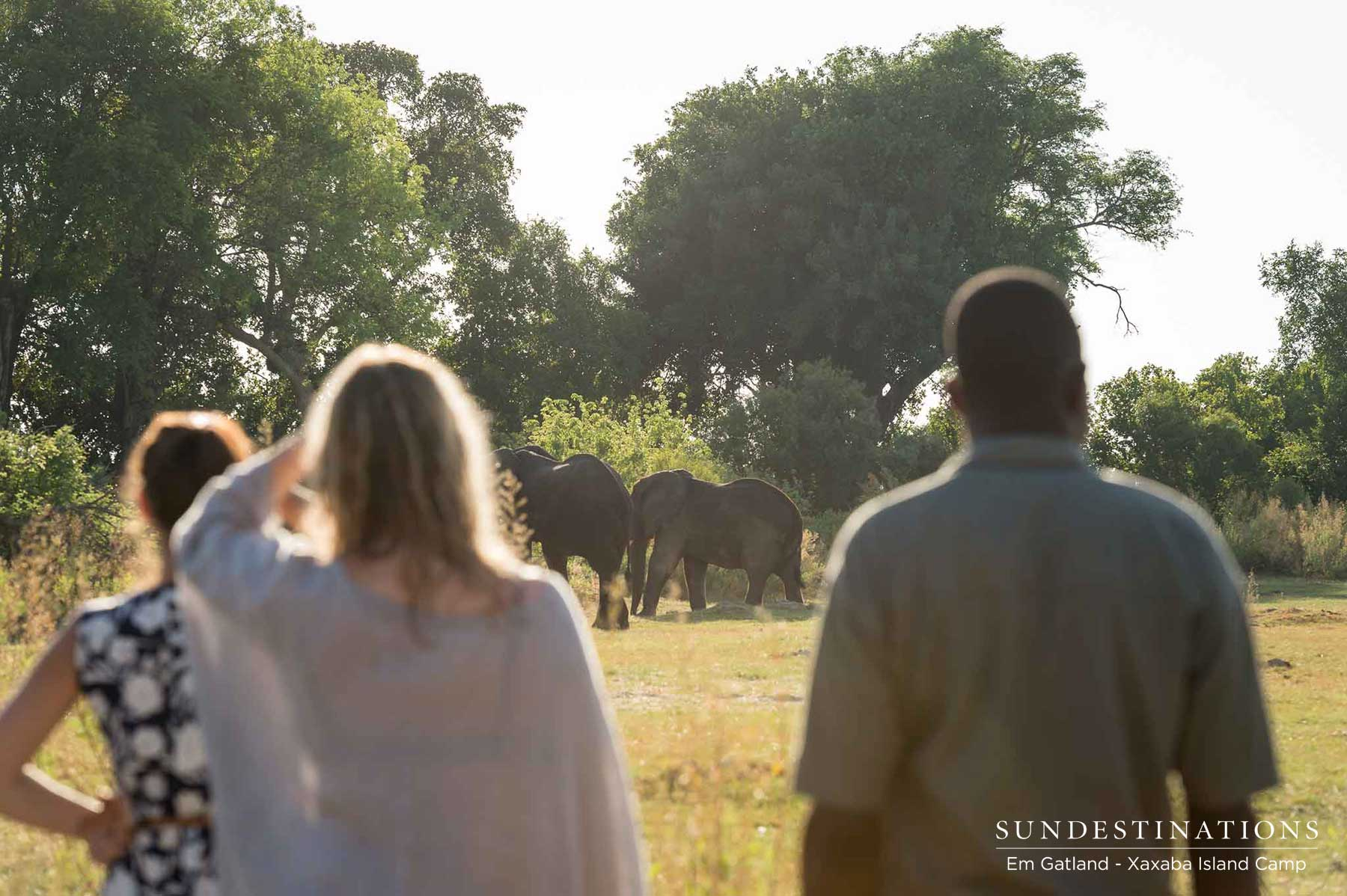 Safari Adventure Activities at Xaxaba Island Camp