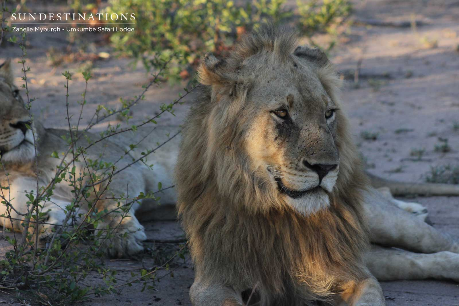 Avoca Lions Male