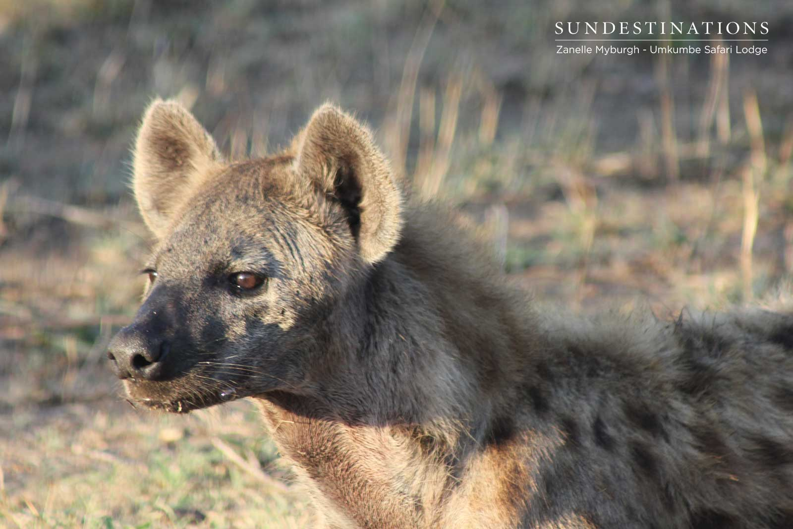 Hyena on Kill