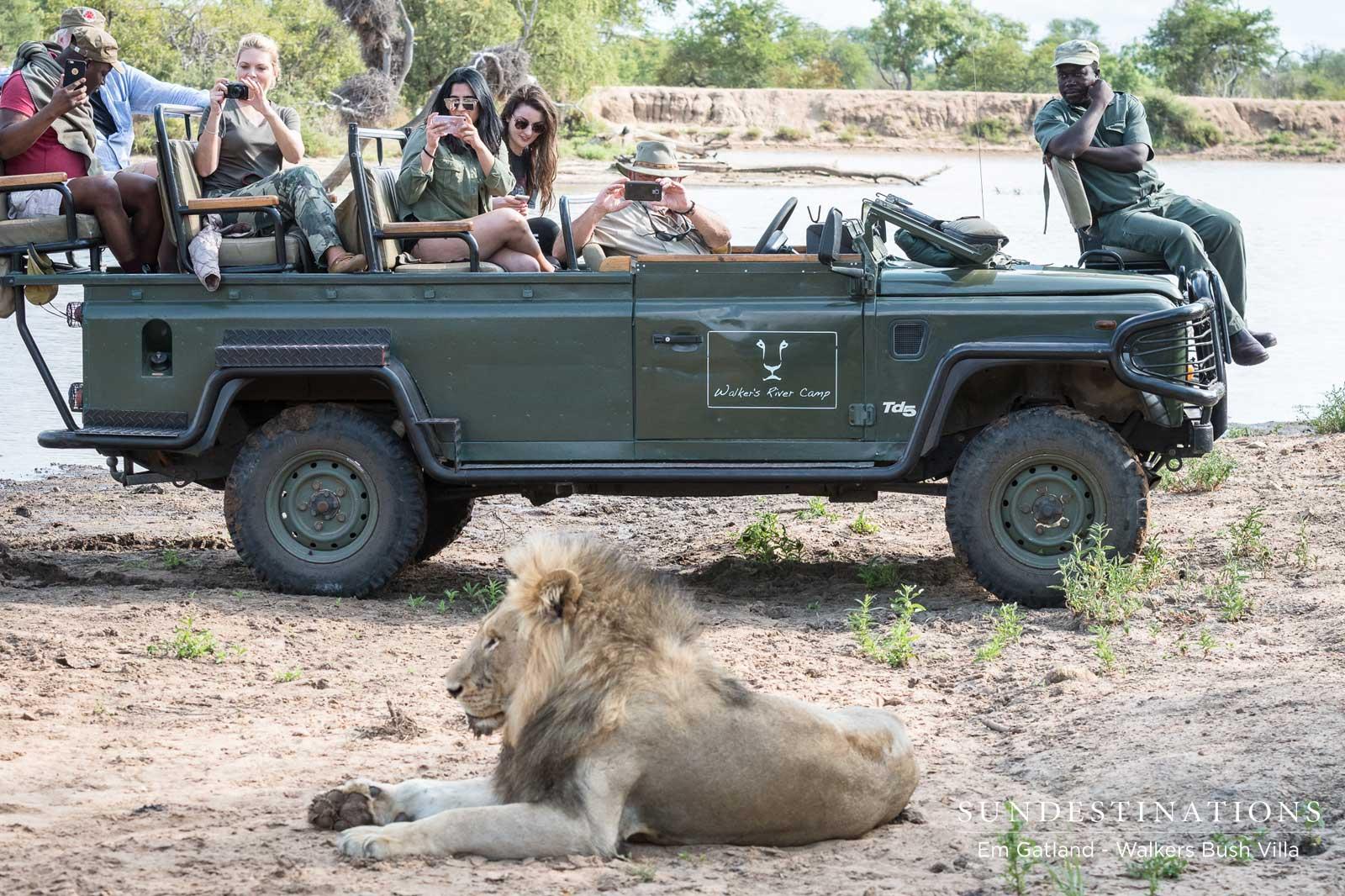 Lions - Mbiri Male Lions