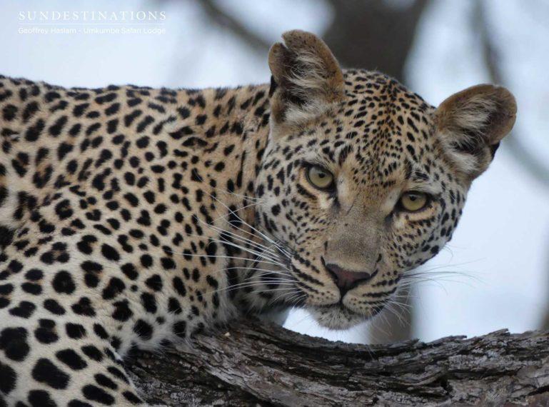 Leopard Lookbook : Umkumbe's Finest Models