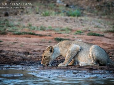This is the first instalment of our monthly Rangers Review, a blog that highlights a few major events and our rangers'favourite sightings from the month.This is the kick-off edition and we hope to document each notable occasion with a portfolio of images and video where possible. Below are a few of our highlights and happenings […]