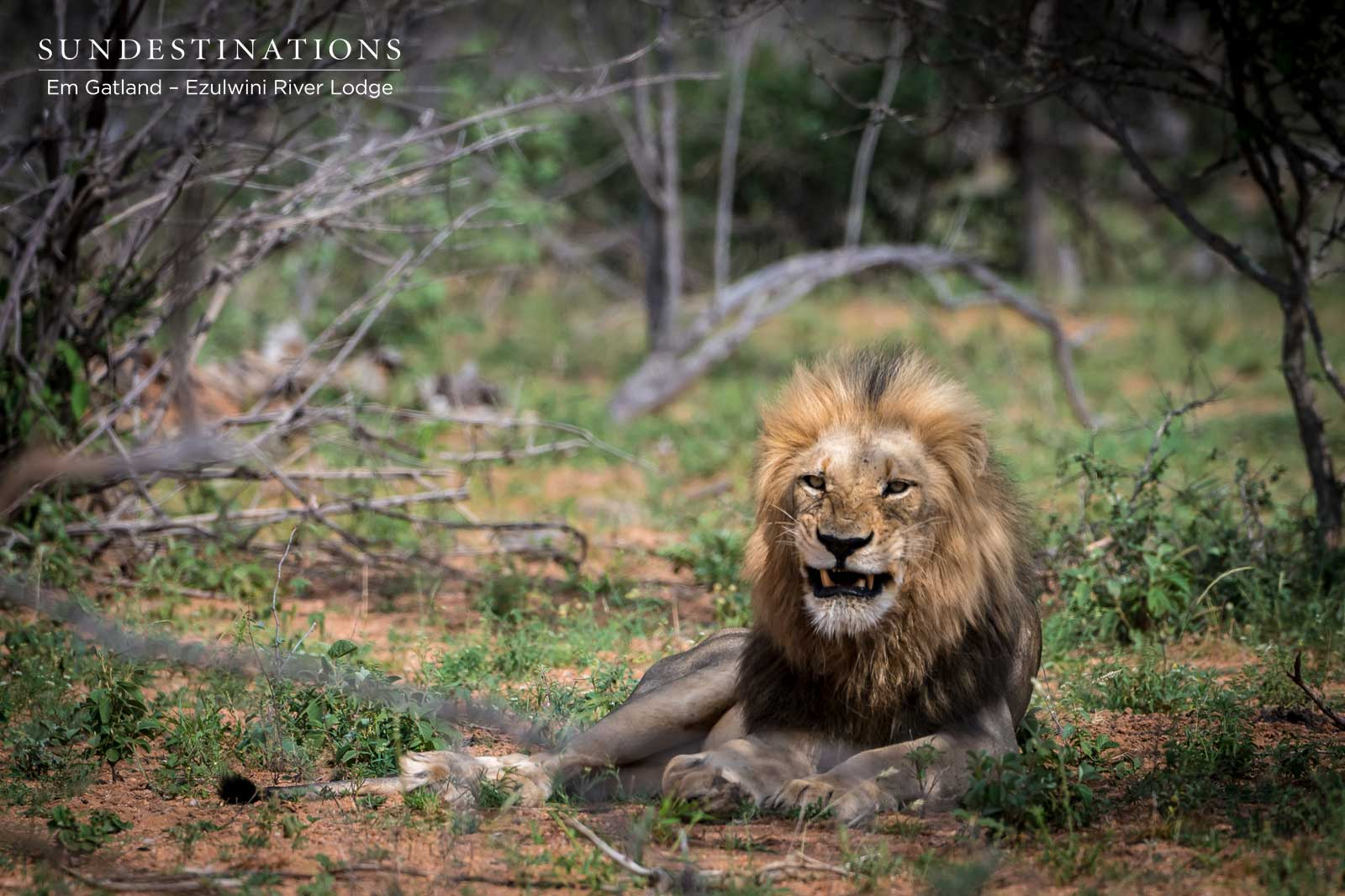 Ezulwini Machaton Lions Bushveld
