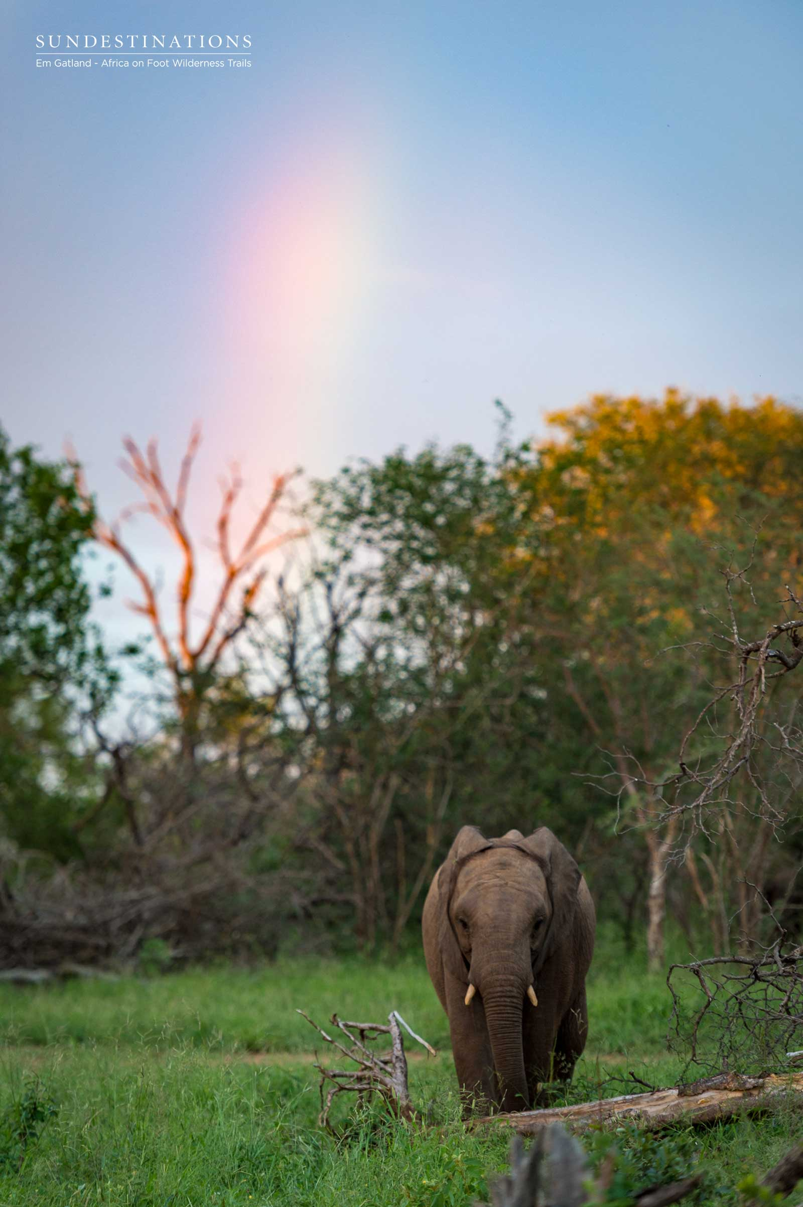 Elephants and Rainbows in the Maseke