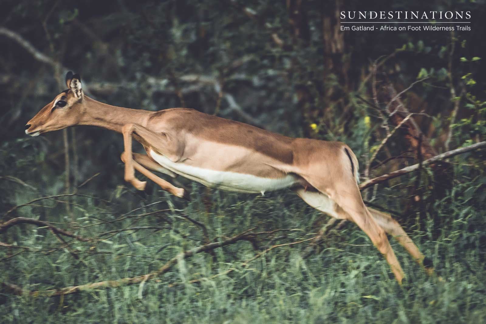 Walking Trails Impala Jump