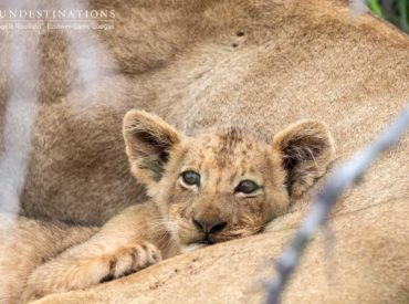 We're onto our second edition of the Rangers Review but we've have been somewhat delayed due to the interruption of holidays and the Easter weekend. We figure you don't mind waiting, provided we supply a wealth of images and updates from our side! From our remote Botswana camps to our easily accessible Kruger camps, lions […]