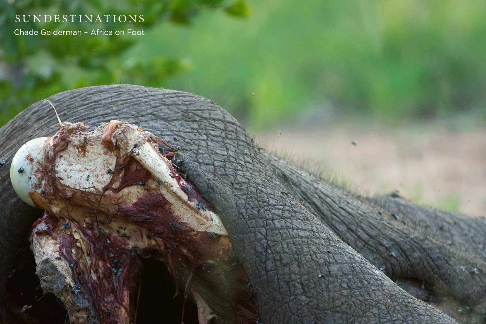 Mbiri Kill - Elephant