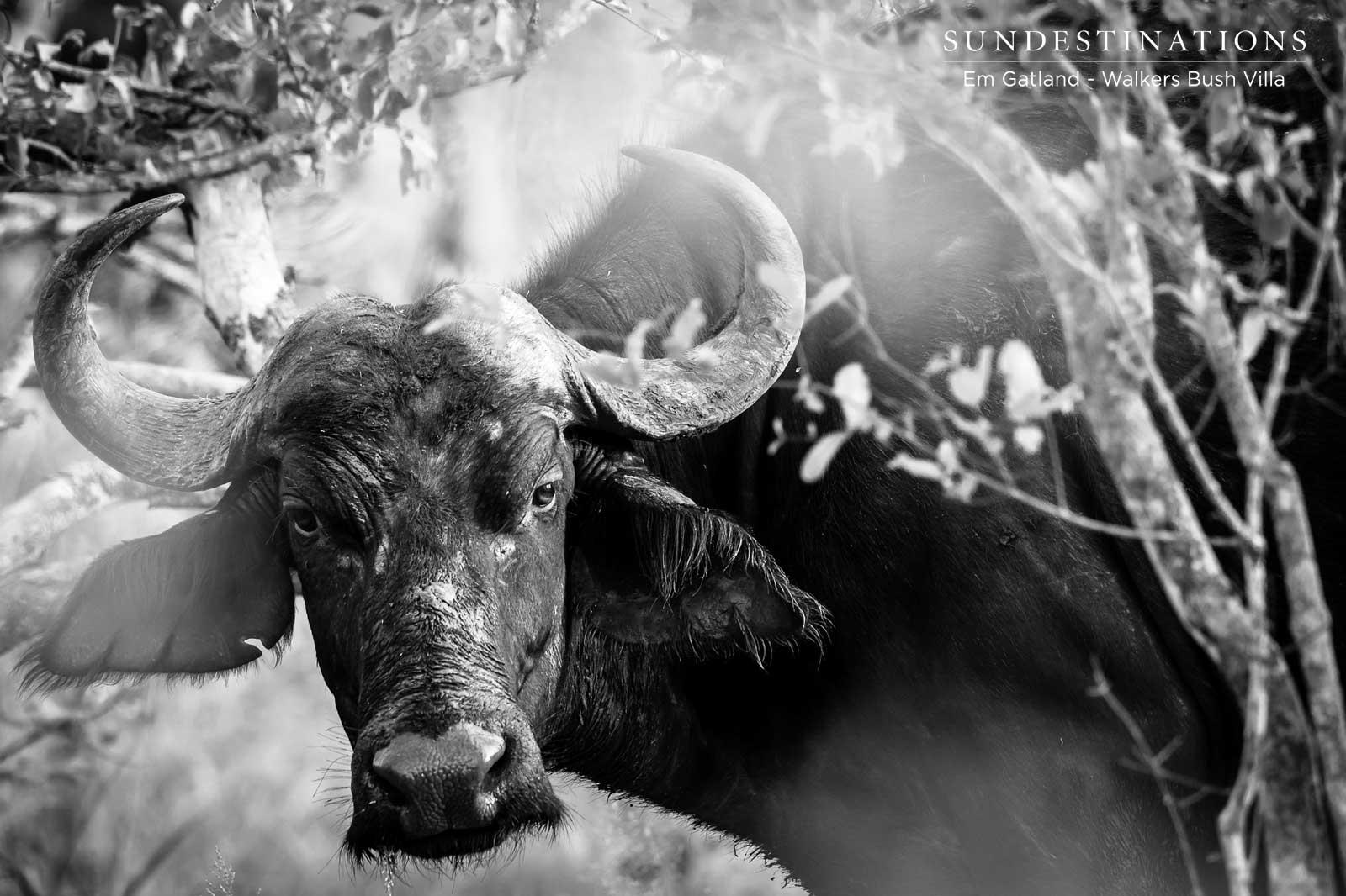 Walkers Bush Villa Buffalo