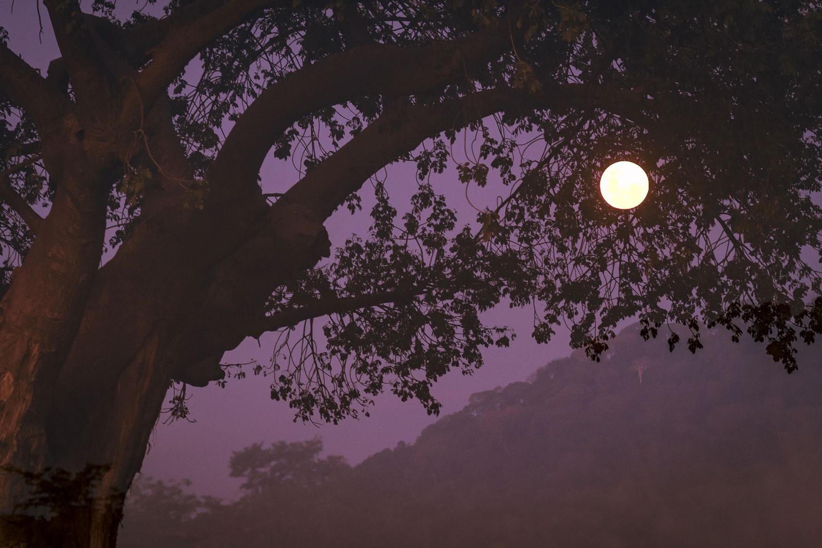 Ghoha Hills Full Moon Em Gatland