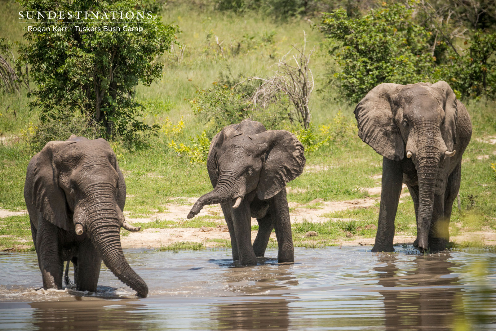 Elephants at Tuskers Bush Camp