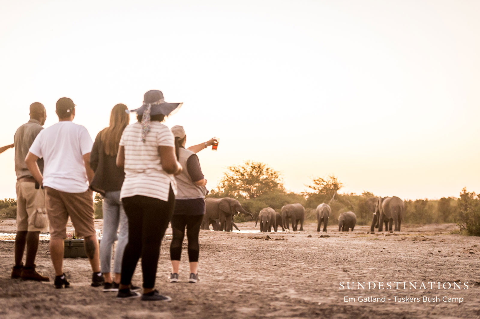 Sundowners with Elephants