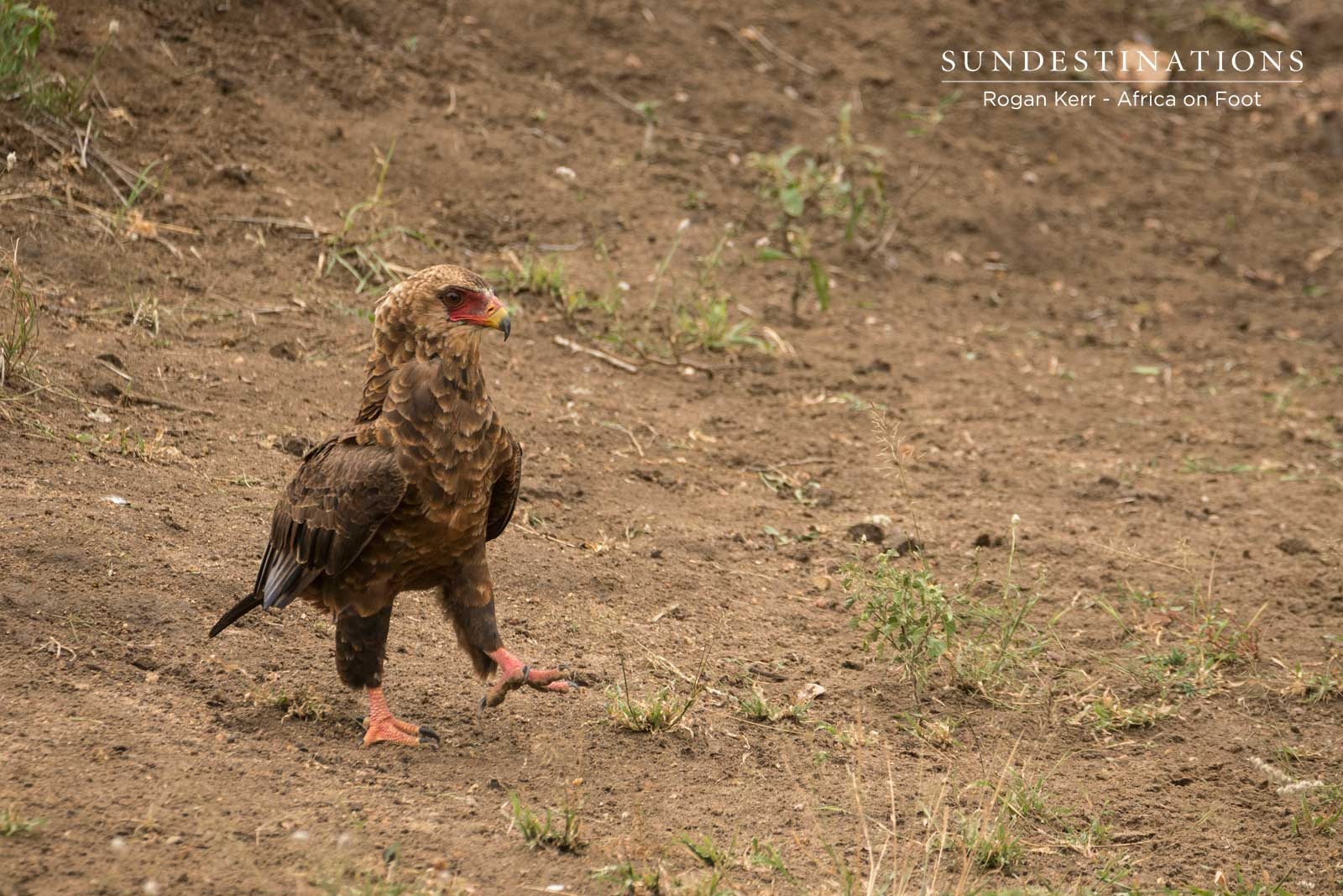 Africa on Foot Eagle