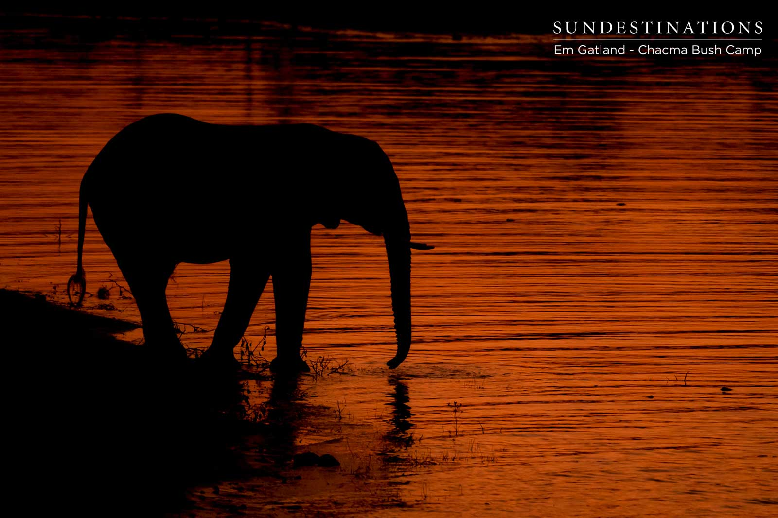 Elephants at Sunset - Chacma Bush Camp