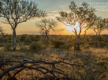 This edition of Week in Pictures we concentrate solely on the wonders of the Greater Kruger, a region comprising mixedzones of vegetation andremarkable landscapes.Rivers course through the various reserves and give rise to riverine vegetation laden with reeds and lush tropical foliage. The savanna is laden with shrub mopane veld, thorn trees, marula veld and […]