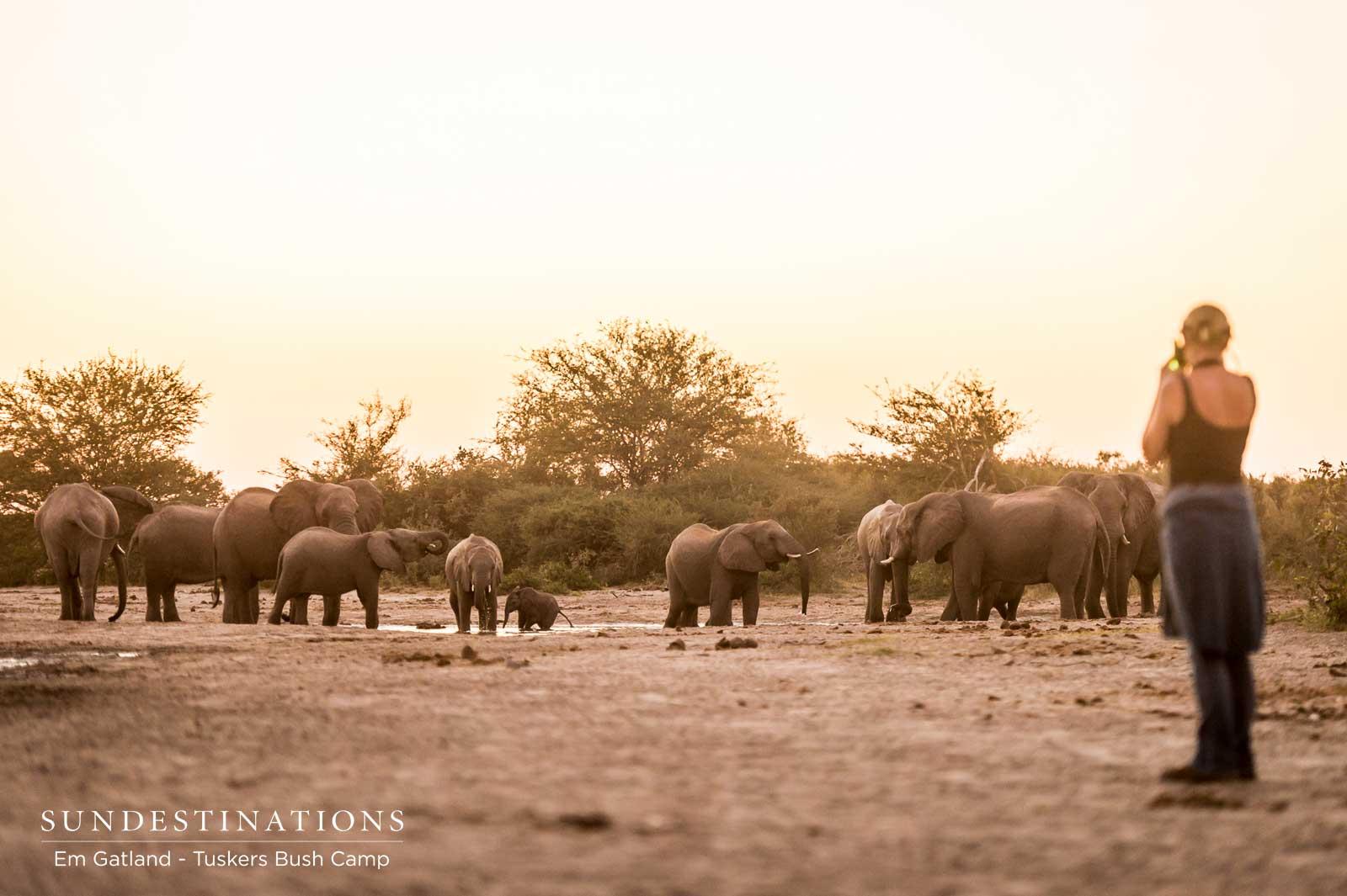 Tuskers Bush Camp Elephants