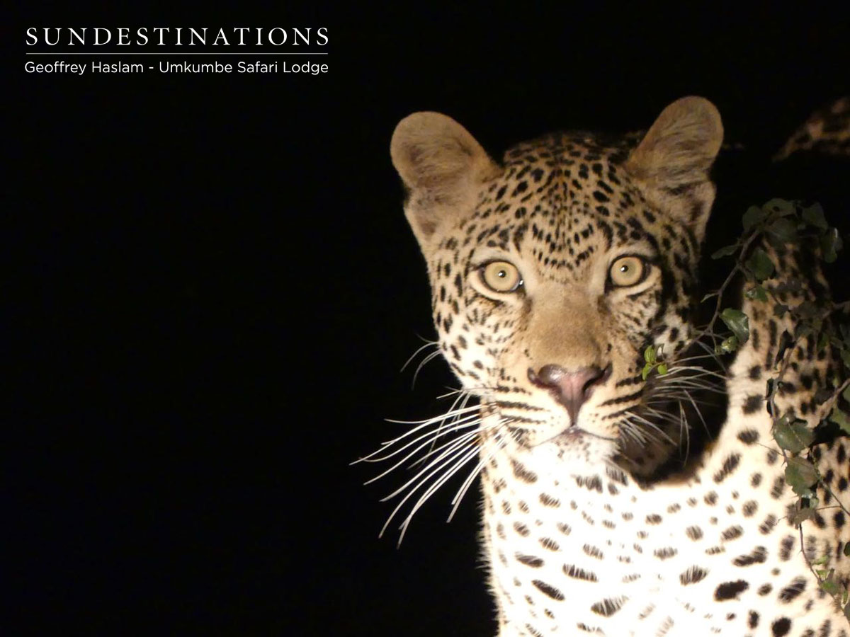 The Week in Pictures : Kruger is Crazy with Leopards