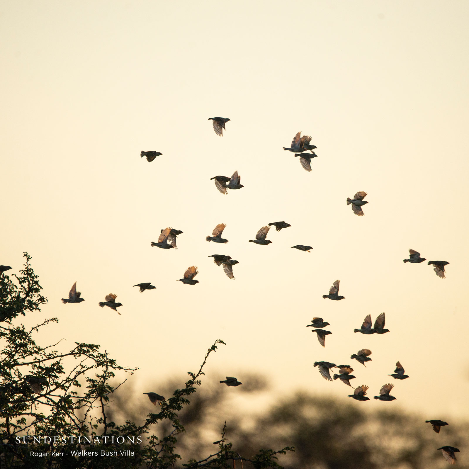 Birds in Timbavati
