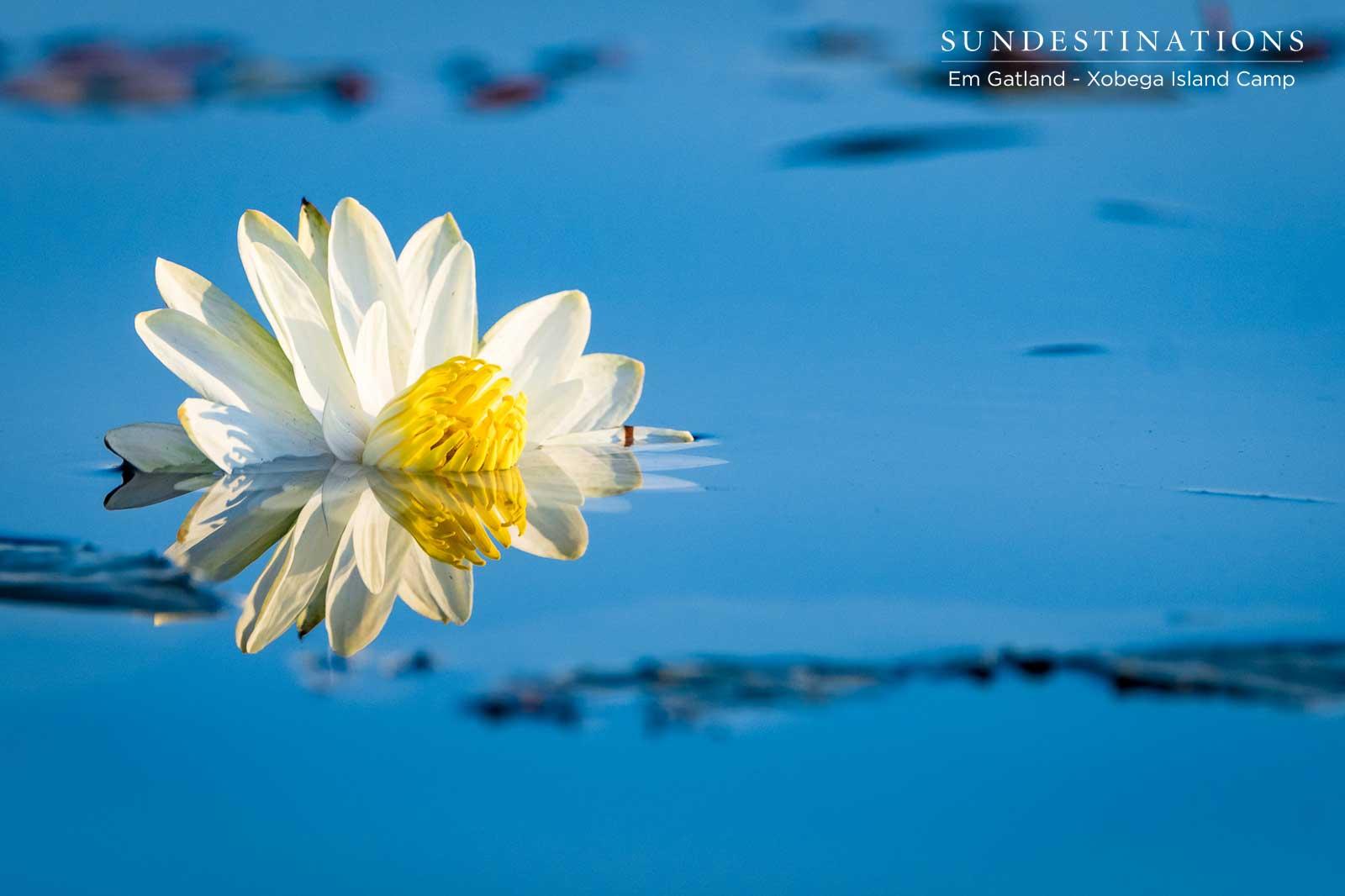 Flowers in the Okavango Delta