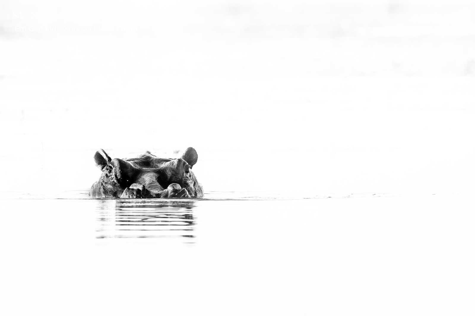 Xobega Hippo Botswana