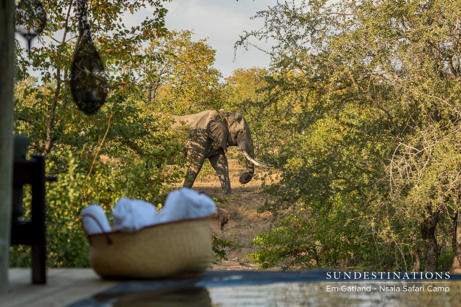 Elephants at Nsala Safari Camp