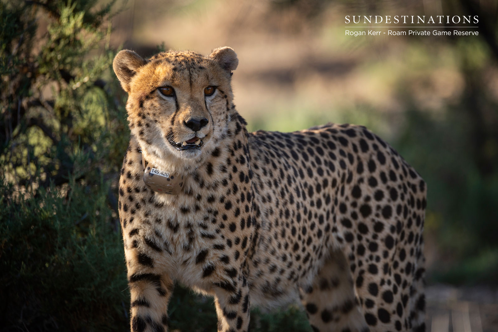 Cheetah Project (ASHIA and EWT) : Observing Cheetah