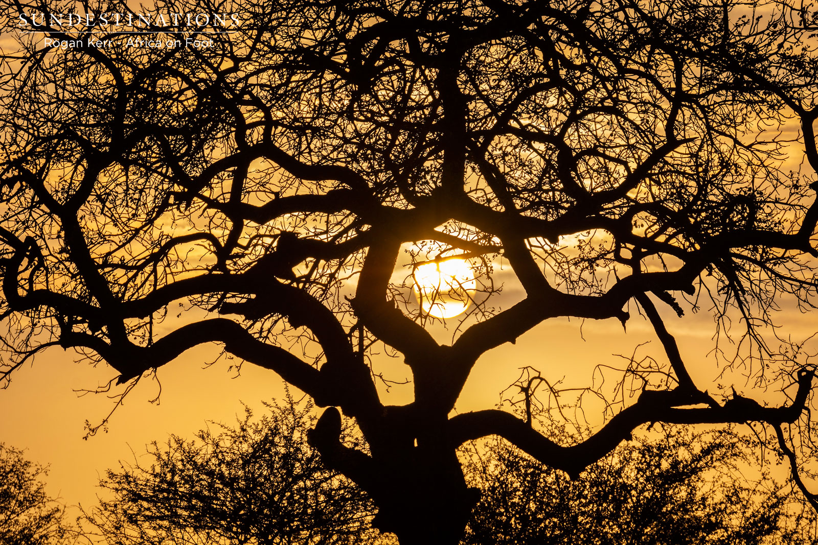 The Week in Pictures : Kaleidoscope of Colours in the Bushveld