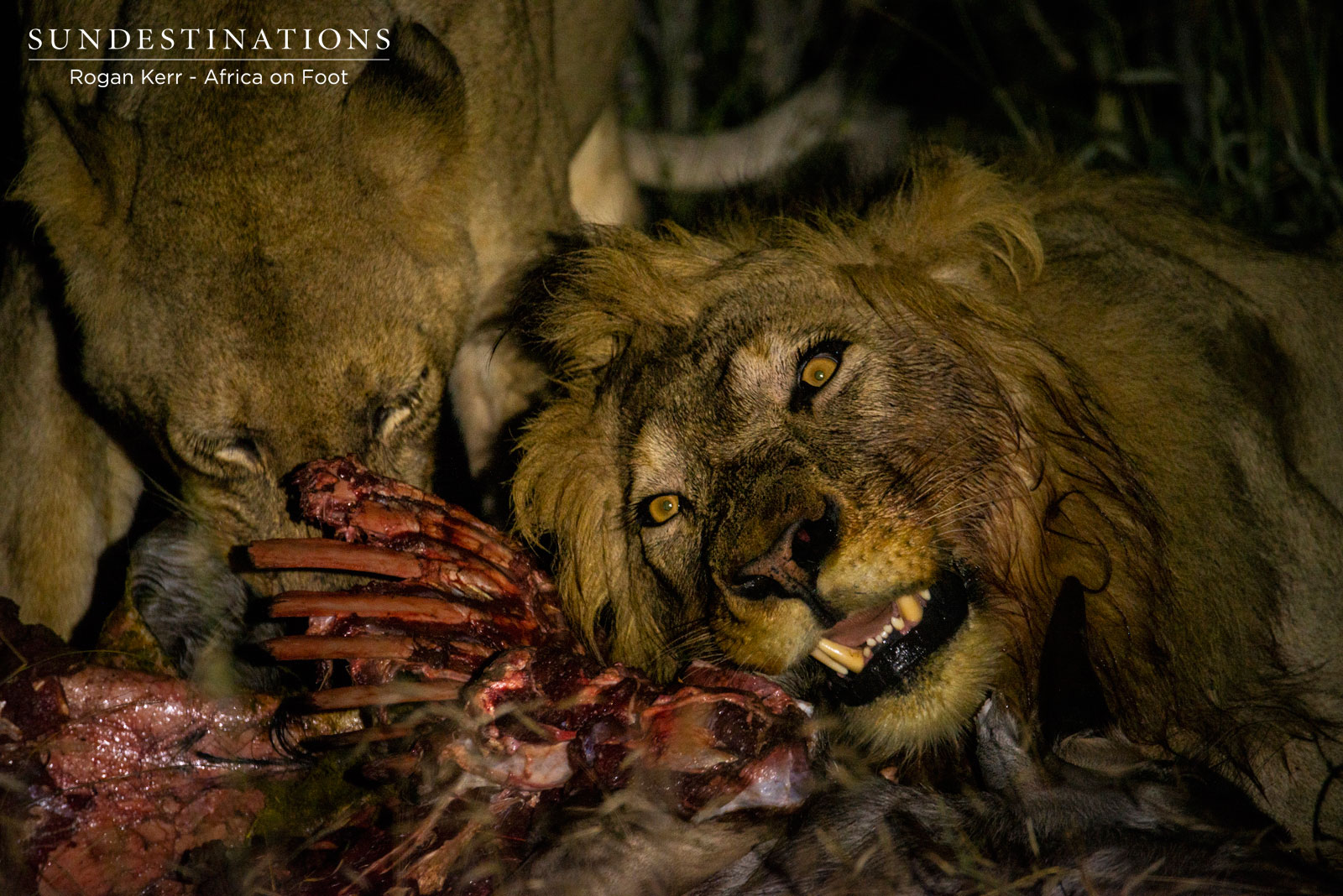 Week in Pics : Lions in the Limelight, Birds in the Daylight