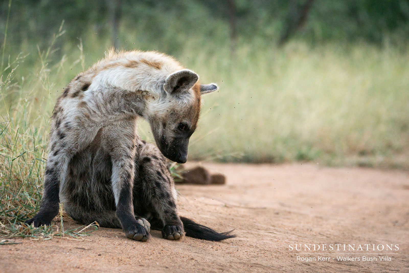 Walkers Bush Villa Hyena