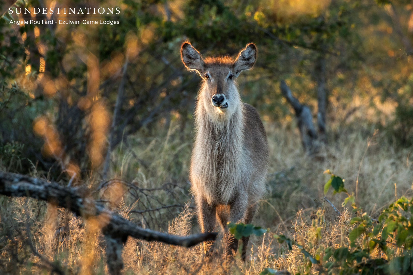 Waterbuck Ezulwini Game Lodges