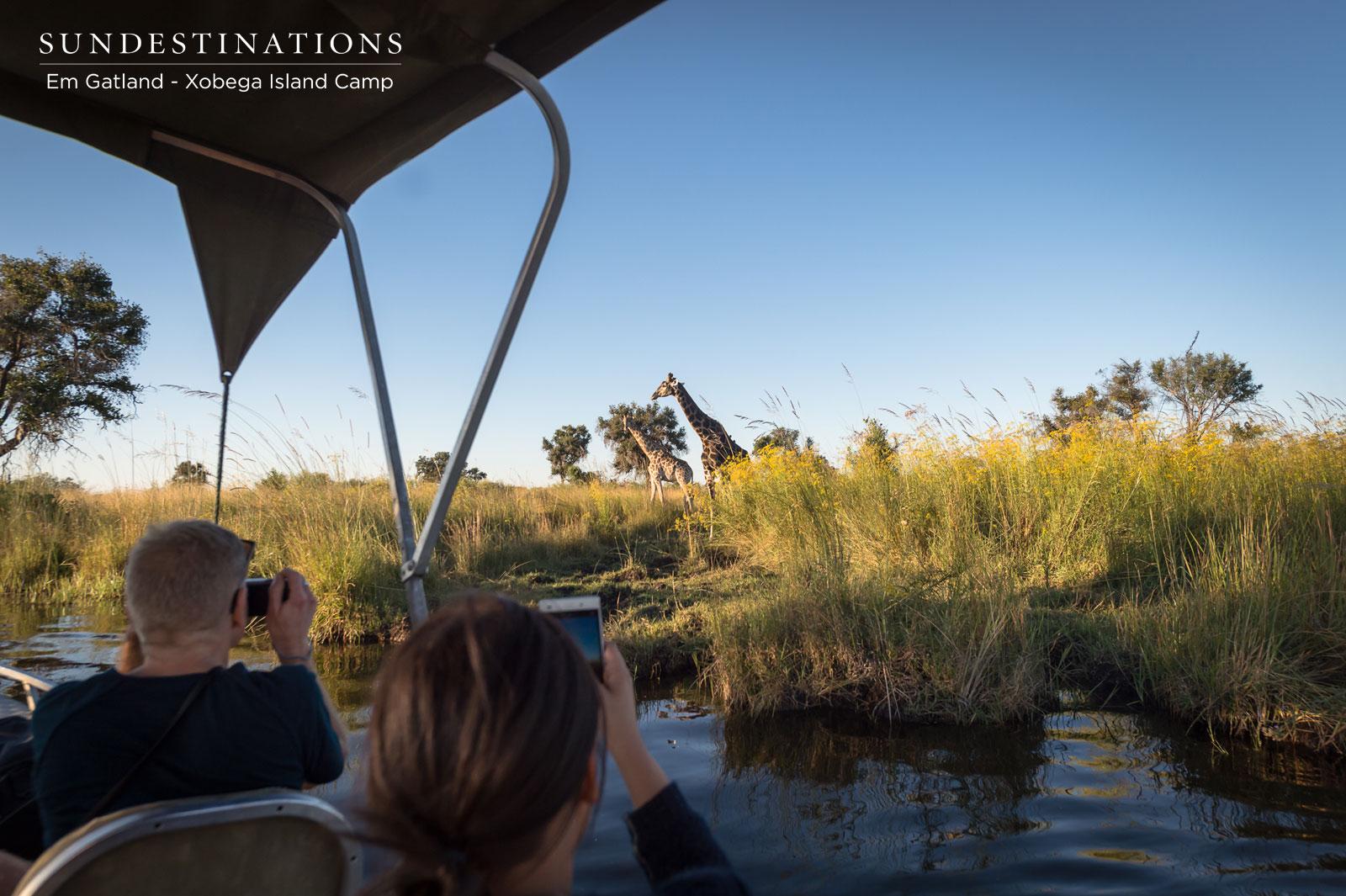 Xobega Island Camp Giraffe