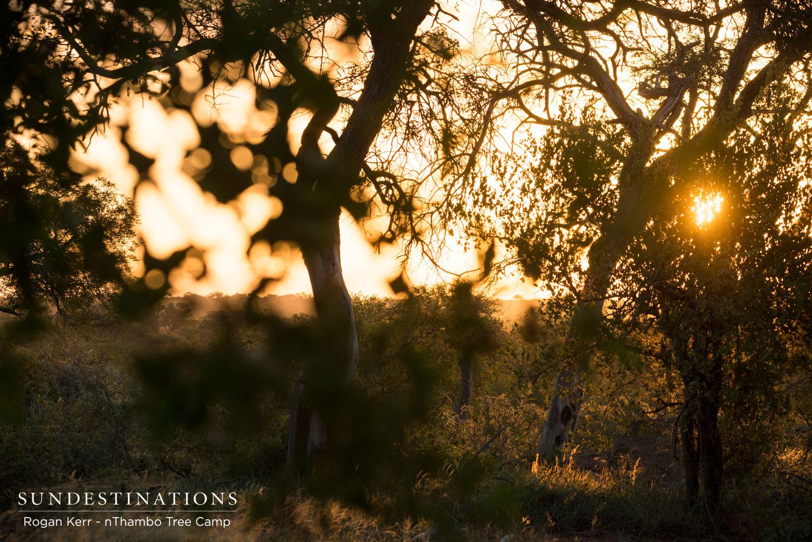 Sunset at nThambo Tree Camp
